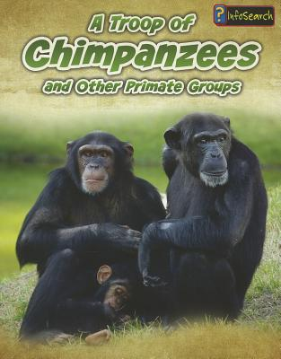 A Troop of Chimpanzees By Spilsbury, Richard